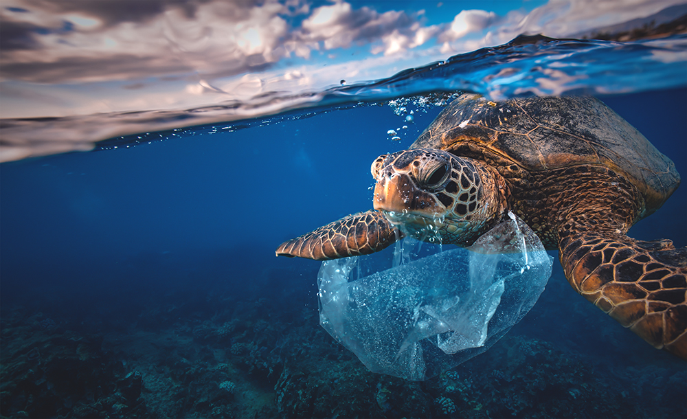 Sea turtle with plastic bag stuck in its mouth