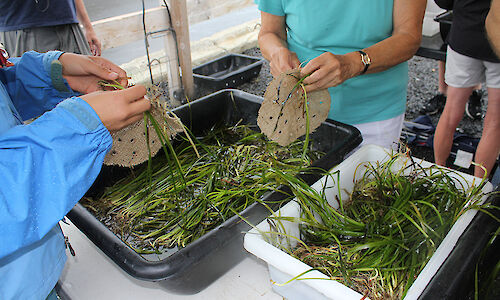 Volunteers creating seedling mats